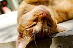 Katze, cat, Costa del Sol, Europe, Geography, Gibraltar, Great Britain, Spain, Europa, Geografie, Grossbritannien, Spanien, España, Geografia, inglaterra, Andalusia, Andalusien, Andalucia