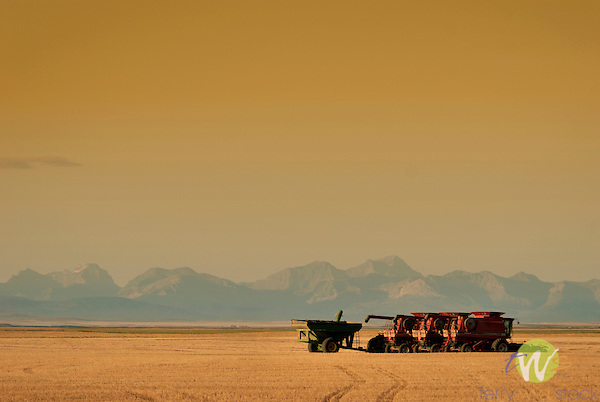 Combines on Cardston plains.