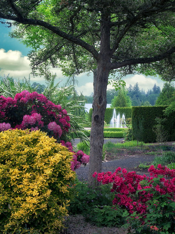 Rhododendrons and water feature. The Oregon Garden. Silverton, Oregon