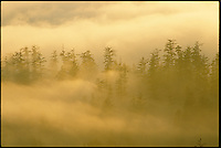 Coastal fog hugs the mountainous forests making a typical landscape scene in Humboldt County in northern California. Landscape picture made for National Geographic magazine.