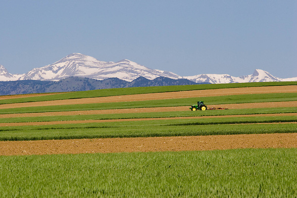 Tractor pulling soil tiller in wheat field, Mount Audubon behind, Boulder, Colorado, .  John offers private photo tours and workshops throughout Colorado. Year-round.