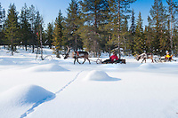 "Solberget, Jokkmokk, Swedish Lapland, Sweden, March 2013. Reindeer sledding is the traditional Sami way of transportation. Dirk and Silke Hagenbusch live their lives in a wilderness retreat  called 'Solberget'. It is situated directly on the Arctic Circle, near the nature reserves ""Granlandet"", ""Päivavuoma"" and ""Pellokiellas"", and close to the ""Muddus"" National Park. Here, nature can be experienced in its purest form – far away from civilisation. As an authentic wilderness farm, Solberget is neither connected to public electricity nor to the mains water supply. Water comes from a spring in the woods and is delicious! Oil lamps and the natural warmth of wood burning stoves provides a soft and cosy atmosphere, even with biting frost outside. Photo by Frits Meyst/Adventure4ever.com"