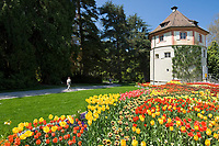 DEU, Deutschland, Baden-Wuerttemberg, Bodensee: Insel Mainau, Blumeninsel und groesste touristische Attraktion am Bodensee. Tulpenbeete vor dem Gaertnerturm | DEU, Germany, Baden-Wuerttemberg, Lake Constance: Mainau Island, Flower Island and greatest tourist attraction at Lake Constance. Tulips and Gardener Tower