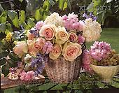 Interlitho, Alberto, FLOWERS, photos, basket, roses, KL16371,#f# Blumen, Natur, flores, naturaleza