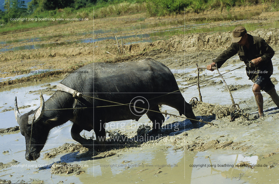PHILIPPINES Palawan, farmer plough paddy field with water buffalo / Philippinen Palawan, Landarbeiter pfluegen Reisfeld mit Wasserbueffel