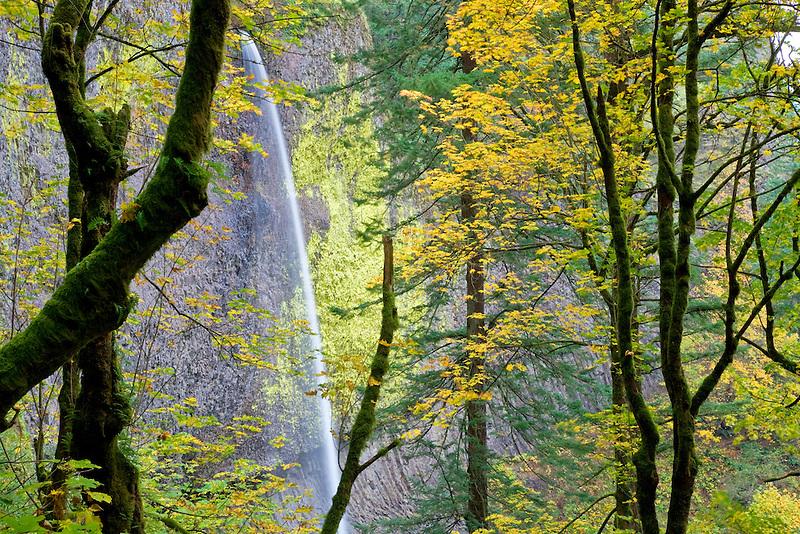 Latourell Falls with fall colored Maple trees. Columbia River Gorge National Scenic Area. Oregon