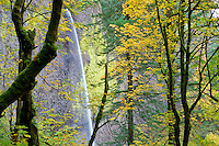 Latourell Falls with fall colored Maple trees. Columbia River Gorge National Scenic Area. Oregon