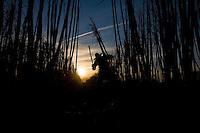 Sugarcane cutters, Cosmopolis city region, Sao Paulo State, Brazil -  Biofuel, Ester ethanol and sugar plant.