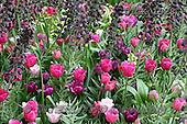 Gisela, FLOWERS, BLUMEN, FLORES, photos+++++,DTGK1928,#f#