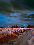 Along the Road in Mystery Valley, Arizona (Infrared) ©2019 James D Peterson,  Mystery Valley is in the back country of the Navajo Nation a few miles south of Monument Valley.  This photo was captured on a windy spring day when the yuccas were in full bloom.