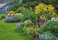 Northeast Harbor, Maine: Thuya Garden in summer. Featuring artemisia, lilies, rudbeckia, dahlias and salvia