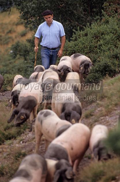 Europe/France/Aquitaine/64/Pyrénées-Atlantiques/Les Aldudes: Pierre Oteiza et ses porcs basques dans la vallée des Aldudes
