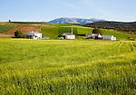 Farmhouse and barns set in rolling arable fields green barley crop near Alhama de Granada, Spain