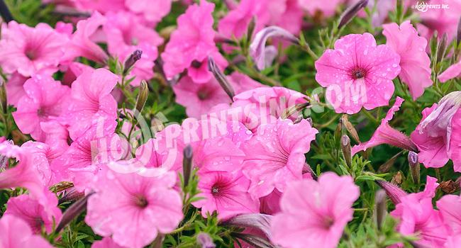 flowers at Delaware Park on 7/13/16