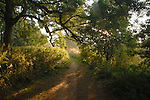 Early morning light filtering through the branches above a track, Boroughbridge, North Yorkshire. England. Sep 2007