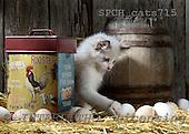 Xavier, ANIMALS, cats, photos, SPCHCATS715,#A# Katzen, gatos