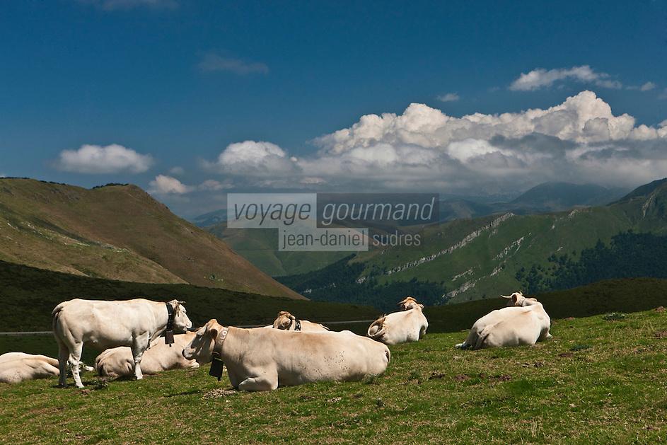Europe/France/Aquitaine/64/Pyrénées-Atlantiques/Pays-Basque/Larrau: Vaches en estive au Port de Larrau,