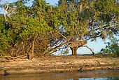 Pará State, Brazil. Xingu River; island where the Juruna used to live; canoe stuck in a tree.