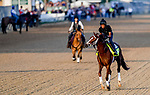 LOUISVILLE, KENTUCKY - MAY 01: Spinoff, trained by Todd Pletcher, exercises in preparation for the Kentucky Derby at Churchill Downs in Louisville, Kentucky on May 1, 2019. John Voorhees/Eclipse Sportswire/CSM