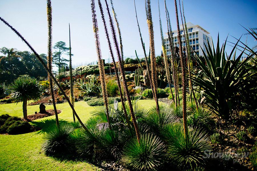 Image Ref: M304<br /> Location: Royal Botanical Gardens, Melbourne<br /> Date: 10.06.17