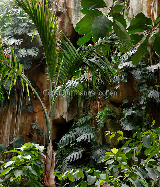 Tropical Rainforest Glasshouse (formerly Le Jardin d'Hiver or Winter Gardens), 1936, René Berger, Jardin des Plantes, Museum National d'Histoire Naturelle, Paris, France. General view of luxuriant tropical foliage around the pool at the bottom of the cave.