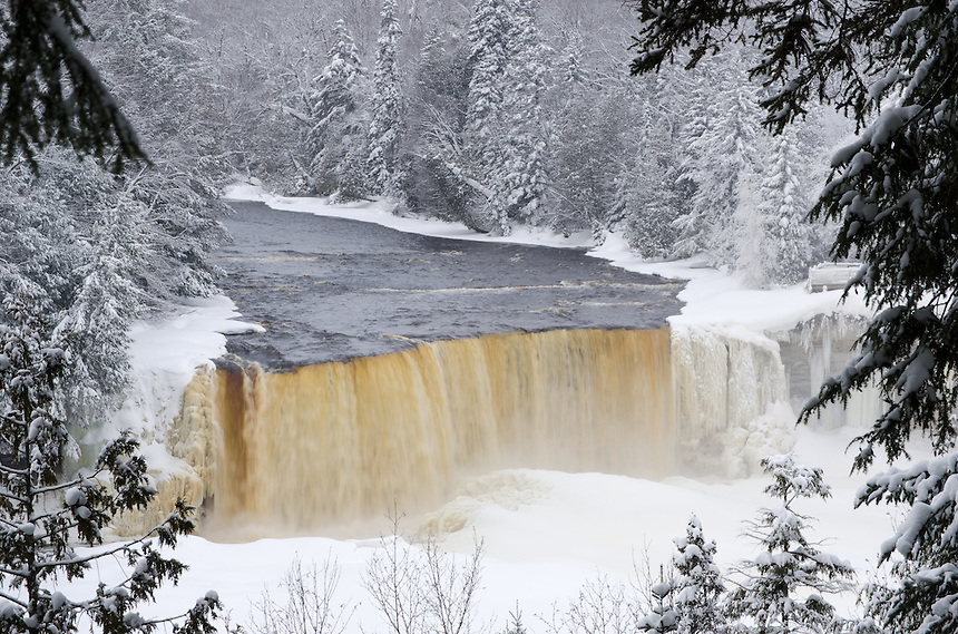 Through the trees, a front view of Tahquamenon Falls. Upper Peninsula of Michigan