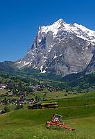 CHE, Schweiz, Kanton Bern, Berner Oberland, Grindelwald: Jungfraubahn Grindelwald - Kleine Scheidegg vorm Wetterhorn | CHE, Switzerland, Bern Canton, Bernese Oberland, Grindelwald: Jungfrau Railway Grindelwald-Kleine Scheidegg and Wetterhorn mountain