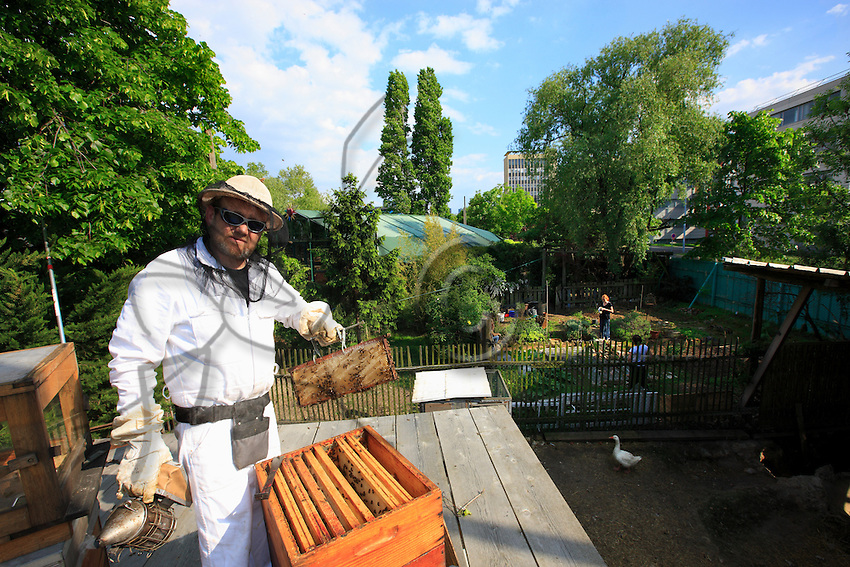Hervé Robert- Garouel, 53 years old, in the apiary he takes care of in the arena of Nanterre. Painter, Hervé began beekeeping in 2003. Also a monitor of undersea diving and biology, he was looking for a second passion. After courses in amateur beekeeping at the SCA, he set up an apiary in the Eure Valley and takes care of several hives, like those of Nanterre. The apiary of the Ferme du Bonheur farm has as its mission to be an activity-orientated support and produce honey, the sale of which will help finance the association. A project for an educational apiary is in the works.