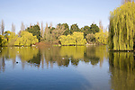 Duck pond in spring with willow trees, Castle Park, Colchester, Essex, England