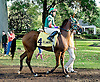 DC Royale Tigre before The Arabian Claiming Crown at Delaware Park on 10/13/12