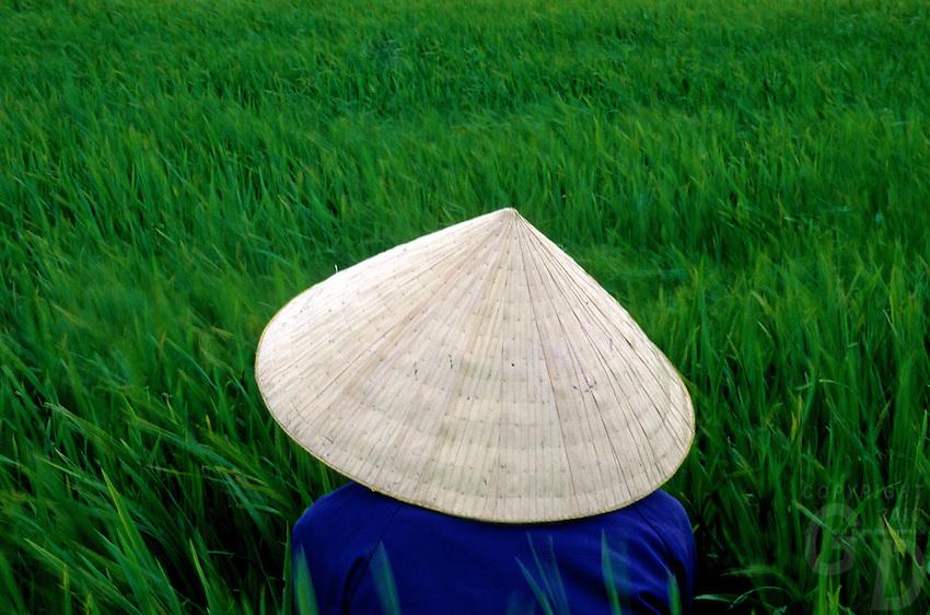 A women rice farmer in the field, Mekong delta, Vietnam