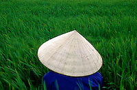 A women rice farmer in the field, Mekong delta, Vietnam