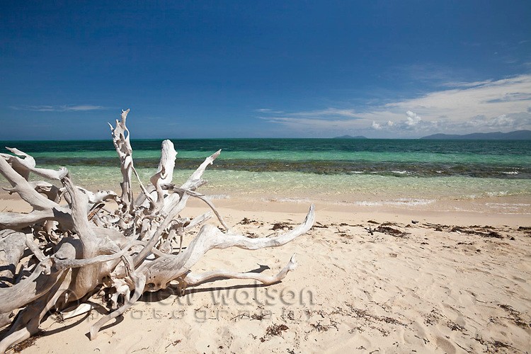 Driftwood on the beach at Green Island - a coral cay off the coast of Cairns.  Great Barrier Reef, Queensland, Australia