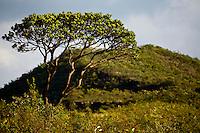 Nova Lima_MG, Brasil...Reserva Ecologica dos Fechos em Nova Lima, Minas Gerais...The Fechos Ecological Reserve in Nova Lima, Minas Gerais...Foto: JOAO MARCOS ROSA / NITRO.
