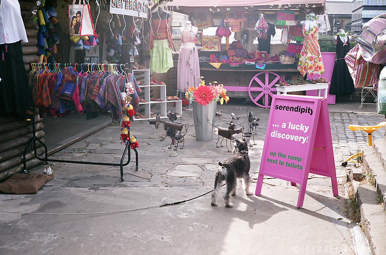 FLESH VERSUS IRON. A DOG OBSERVES IRON DOGS IN CAMDEN MARKET