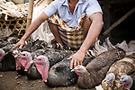 A man sells turkeys at a market in Kopang, Lombok, Indonesia.