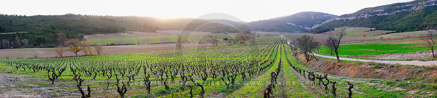 Chateau Pech-Latt. Near Ribaute. Les Corbieres. Languedoc. France. Europe. Vineyard. Mountains in the background.