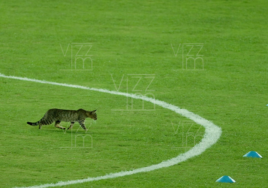 ARMENIA -COLOMBIA-17-05-2014. Un gato invade el campo de juego previo al encuentro de ida entre Deportes Quindio y América de Cali por los cuartos de final del Torneo Postobón I 2014 jugado en el estadio Centenario de la ciudad de Armenia./ A cat invade the field prior the first leg match between Deportes Quindio and America de Cali for the quarterfinals of the Postobon Tournament I 2014 played at Centenario stadium in Armenia city. Photo: VizzorImage/ Gabriel Aponte / Staff