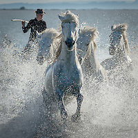 Three days in the Camargue, France photographing wild horses, with 'Magic is', lead by Simon Weir, plus Chris and Monique Weston, staying at Les Riziers, Les Saintes Maries de la Mer. 1st-4th May 2015.