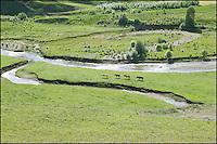 Four tibetan horses.