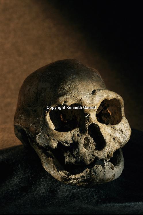 Homo erectus skull, toothless, Dmanisi, Georgia Homo Erectus site, 1.8 million year old hominins