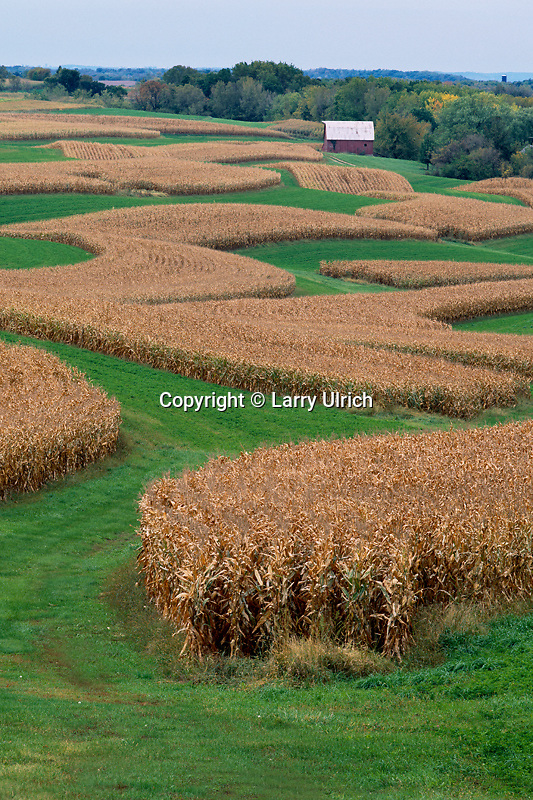 Corn crop<br /> Farm on Military Ridge<br /> Grant County<br /> Wisconsin