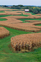Corn crop<br />