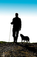 Shepherd and Sheep Dog.