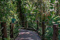 A tourist follows the boardwalk through the rain forest at Hawai'i Tropical Botanical Garden, Onomea, Big Island of Hawaiʻi.