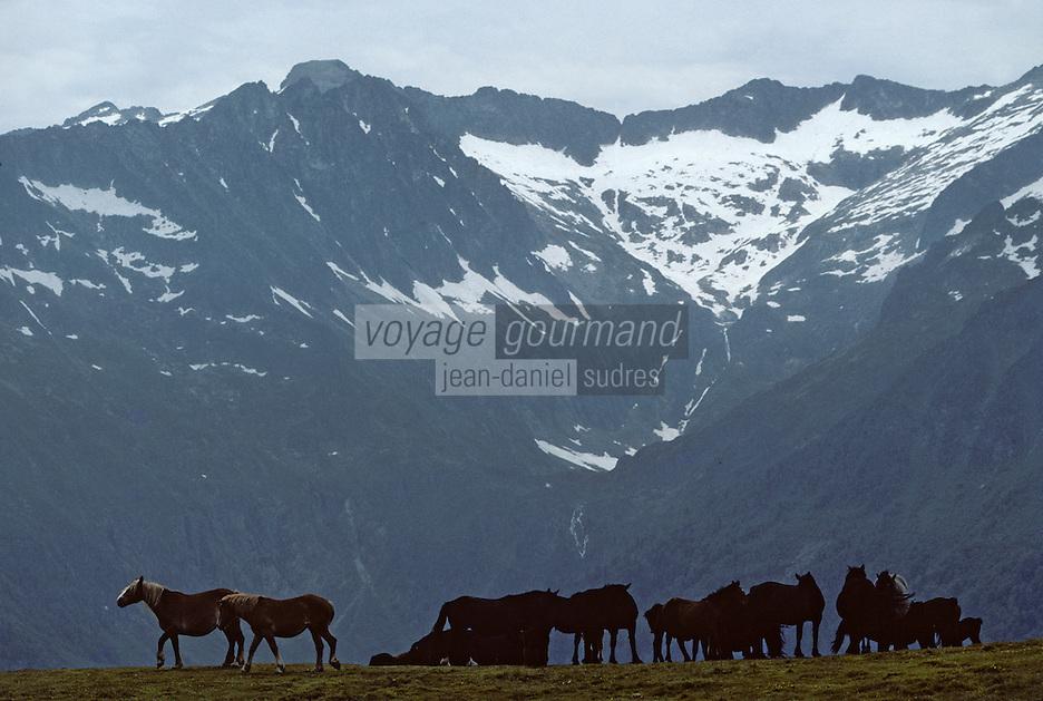 Europe/France/Midi-Pyrénées/09/Ariège/Env Port-de-Cers: Chevaux en estive au col d'Agnes