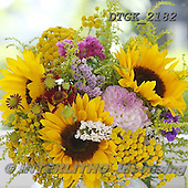 Gisela, FLOWERS, BLUMEN, FLORES, photos+++++,DTGK2182,#f# ,sunflowers