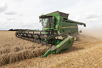 Harvesting wheat in the Lincolnshire fens<br /> ©Tim Scrivener Photographer 07850 303986<br />      ....Covering Agriculture In The UK....