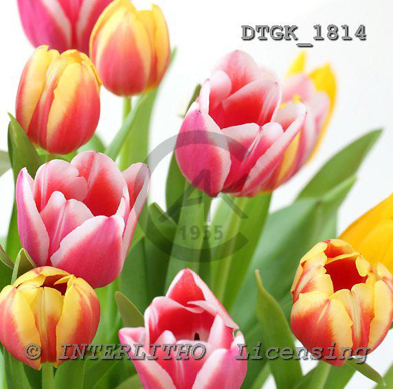 Gisela, FLOWERS, photos, DTGK1814,#f# Blumen, flores, retrato