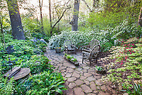 Small, private patio of stepping stones with rustic bent wood chairs, surrounded by flowering Snow azaleas in morning light, spring woodland garden, Boninti Garden, Virginia
